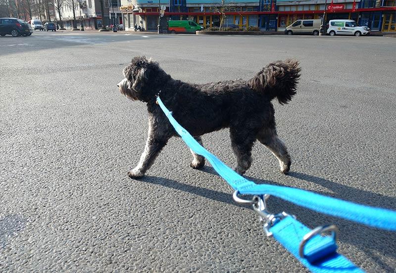 Hond aan de lijn op Dapperplein