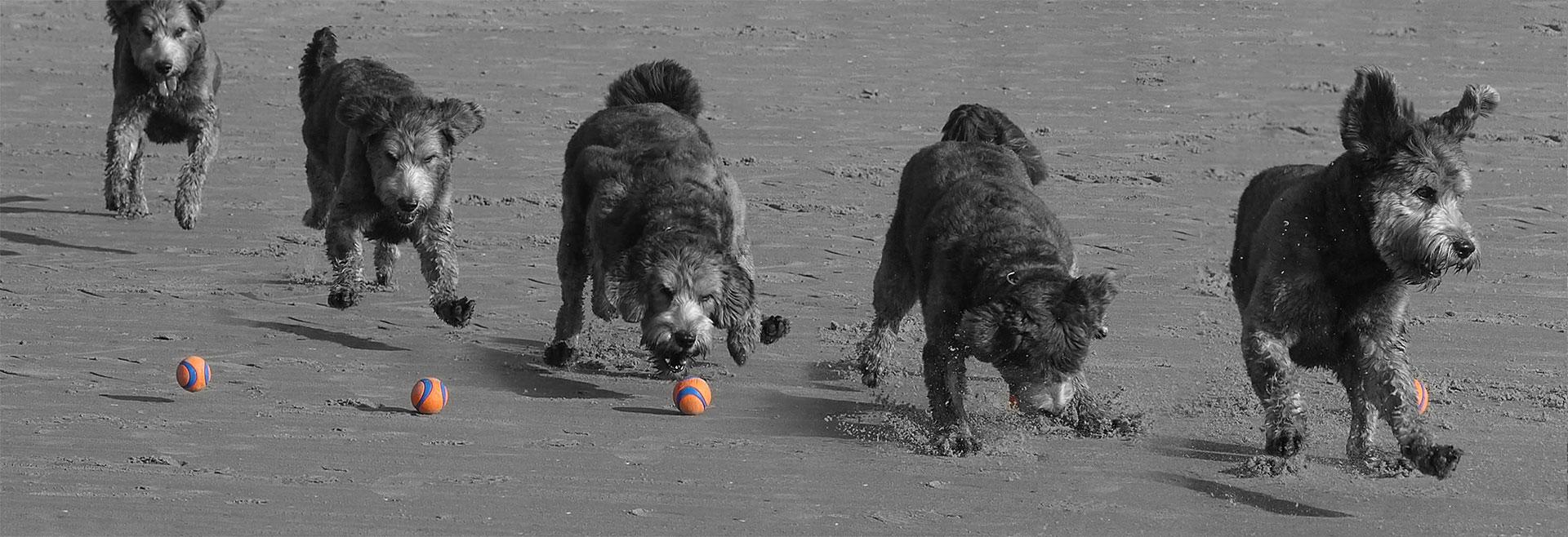 Hond op het strand frame by frame